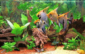 How can I lower the pH in my aquarium quickly